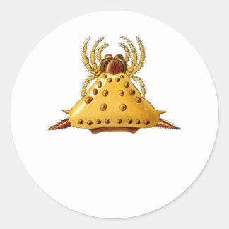 Madagascar Spider Classic Round Sticker