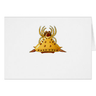 Madagascar Spider Greeting Card