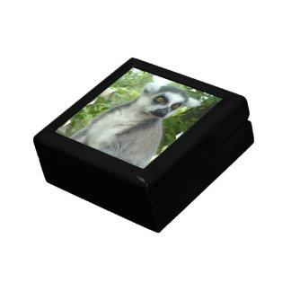 Madasgcar Lemur Gift Box