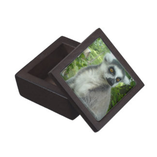 Madasgcar Lemur Premium Gift Box