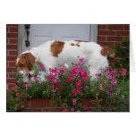 Maddie el perro de la flor tarjetón