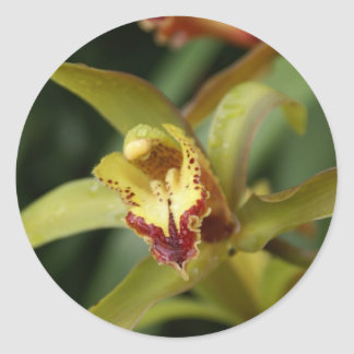 Madeira orchid classic round sticker