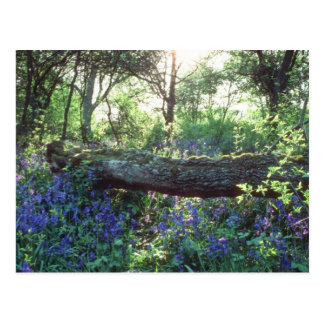 Madera amarilla del Bluebell, madera del parque de Postales