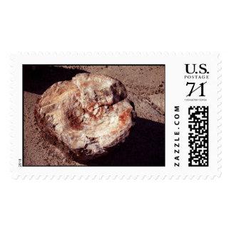 Madera aterrorizada - sello grande