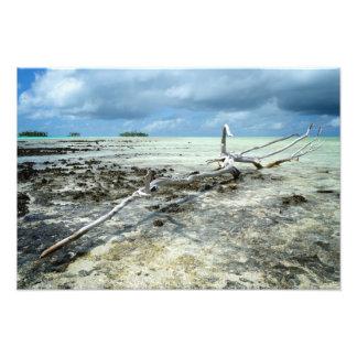 Madera muerta en el Pacífico Cojinete