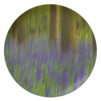 Maderas abstractas del Bluebell Platos