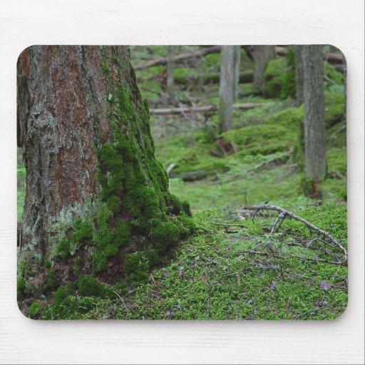 Maderas cubiertas de musgo de los bosques de los á alfombrilla de ratones