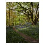 Maderas del bluebell de la primavera póster
