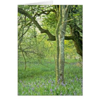 Maderas del Bluebell, flores de las colinas de Qua Tarjeta De Felicitación