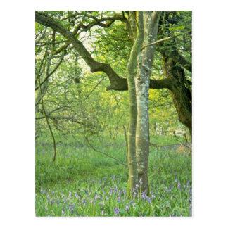 Maderas del Bluebell, flores de las colinas de Qua Postal