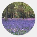 Maderas del Bluebell, Inglaterra Pegatina