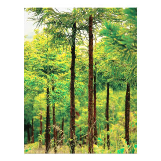 "Maderas del cedro japonés folleto 8.5"" x 11"""