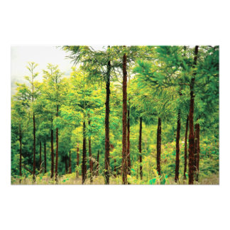 Maderas del cedro japonés foto