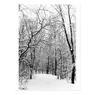 Maderas del invierno tarjetas postales