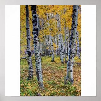 Maderas del otoño posters