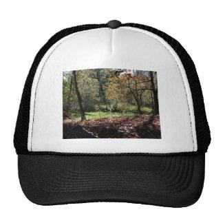 maderas en otoño gorras