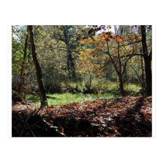 maderas en otoño postales