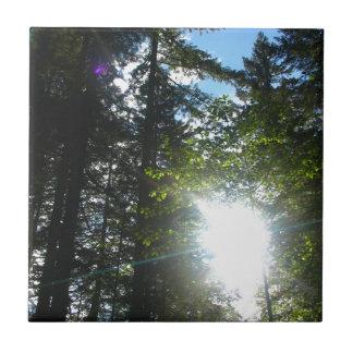 Maderas soleadas azulejo cuadrado pequeño