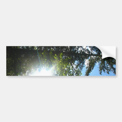Maderas soleadas pegatina de parachoque