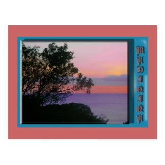 Madinina tree of the sun post card