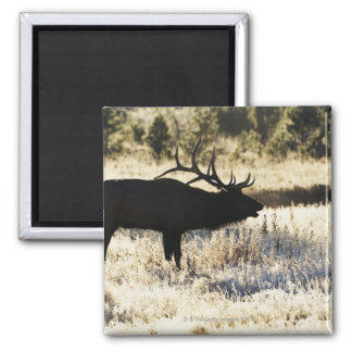 Madison River, Yellowstone NP, Wyoming, USA 2 Inch Square Magnet