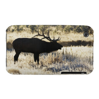 Madison River, Yellowstone NP, Wyoming, USA iPhone 3 Case-Mate Case
