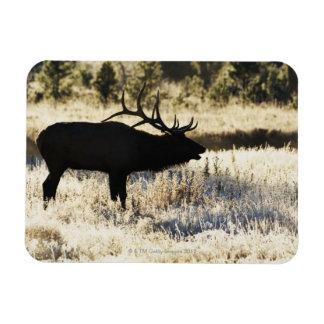 Madison River, Yellowstone NP, Wyoming, USA Rectangular Photo Magnet