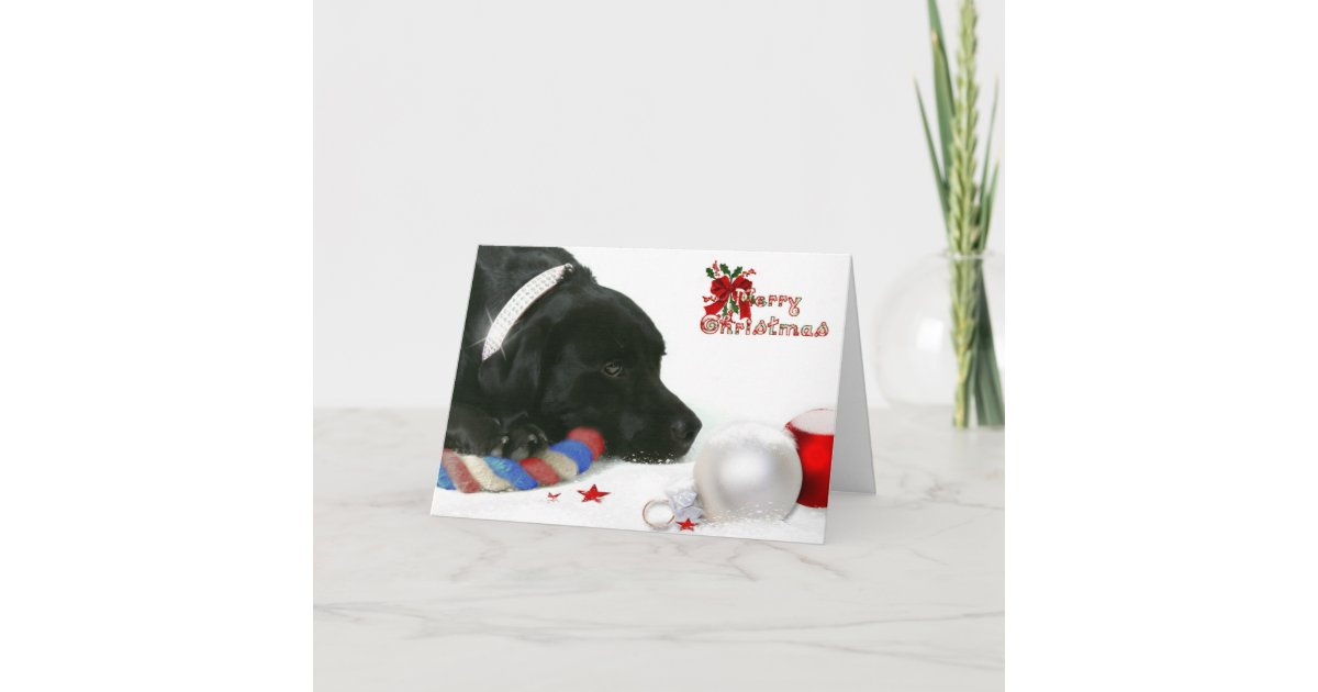 Madison the Black Labrador Christmas Card | Zazzle.com