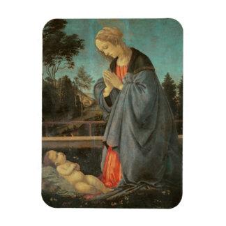 Madonna que adora al niño, c.1477-80 (aceite en p iman