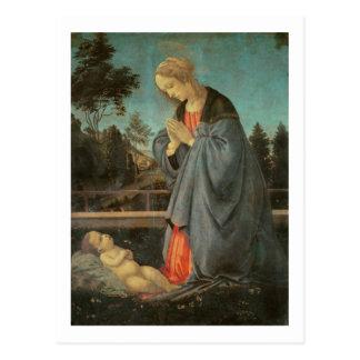 Madonna que adora al niño, c.1477-80 (aceite en p tarjeta postal