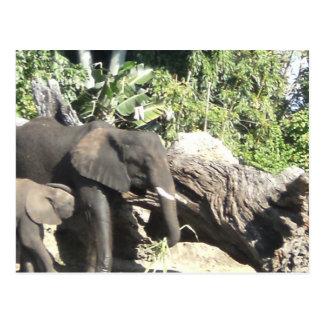 Madre con el elefante del bebé tarjeta postal