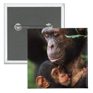Madre del chimpancé que consolida al bebé pin cuadrada 5 cm