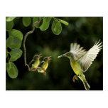 Madre del colibrí tarjeta postal