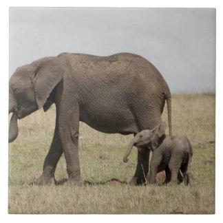 Madre del elefante africano con caminar del bebé azulejo cuadrado grande