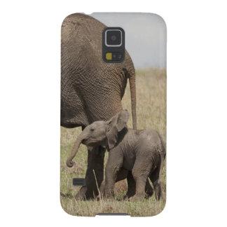 Madre del elefante africano con caminar del bebé carcasas para galaxy s5