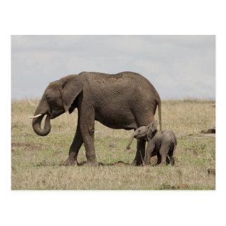 Madre del elefante africano con caminar del bebé postal
