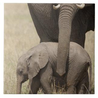 Madre del elefante africano con el bebé 2 que cami azulejo cuadrado grande