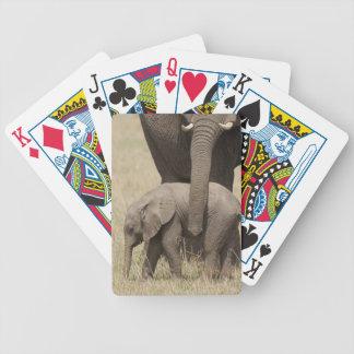 Madre del elefante africano con el bebé 2 que cami baraja cartas de poker