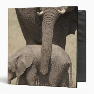 """Madre del elefante africano con el bebé 2 que cami carpeta 1 1/2"""""""