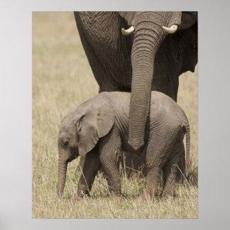 Madre del elefante africano con el bebé 2 que cami posters