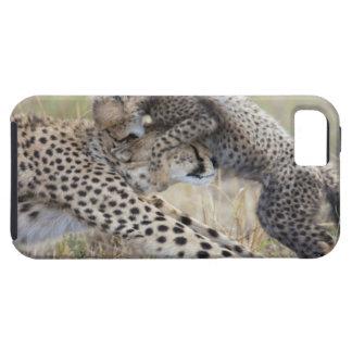 Madre del guepardo (jubatus del Acinonyx) que iPhone 5 Carcasa
