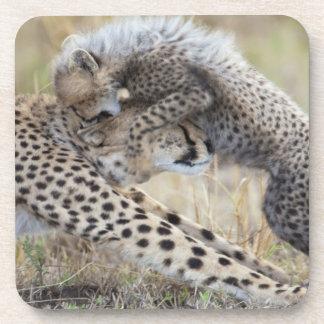 Madre del guepardo (jubatus del Acinonyx) que jueg Posavaso