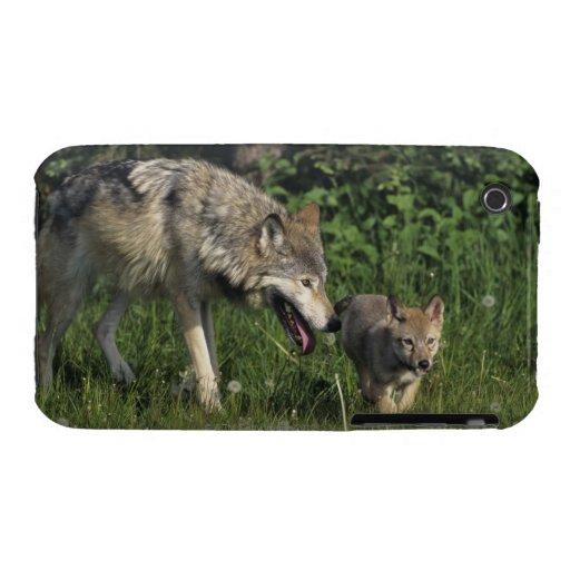 Madre del lobo con el perrito joven carcasa para iPhone 3