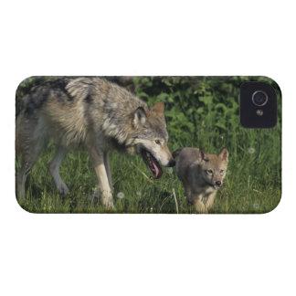 Madre del lobo con el perrito joven Case-Mate iPhone 4 cobertura
