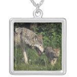 Madre del lobo con el perrito joven colgante cuadrado