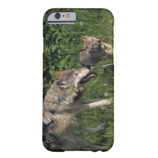 Madre del lobo con el perrito joven funda para iPhone 6 barely there
