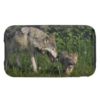 Madre del lobo con el perrito joven iPhone 3 tough carcasas