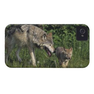 Madre del lobo con el perrito joven iPhone 4 coberturas