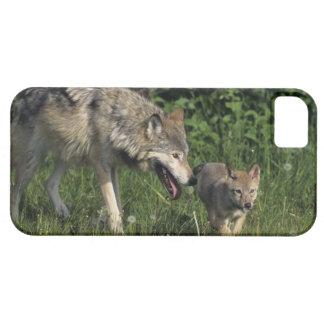 Madre del lobo con el perrito joven iPhone 5 funda