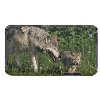 Madre del lobo con el perrito joven iPod touch carcasa